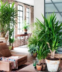 ambiente plantas interior