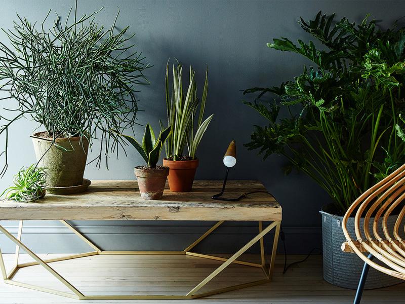 C mo cuidar plantas de interior hogar qps - Cuidados plantas interior ...