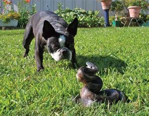 perro herido por serpiente