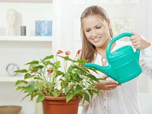 riego de plantas de interior
